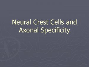 Neural Crest Cells and Axonal Specificity Neural Crest