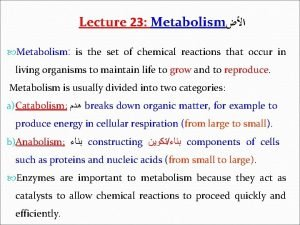 Lecture 23 Metabolism Metabolism is the set of