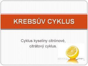 KREBSV CYKLUS Cyklus kyseliny citrnov citrtov cyklus Krebsv