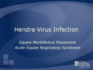Hendra Virus Infection Equine Morbillivirus Pneumonia Acute Equine