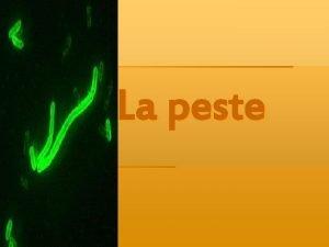 La peste La peste es una enfermedad infectocontagiosa