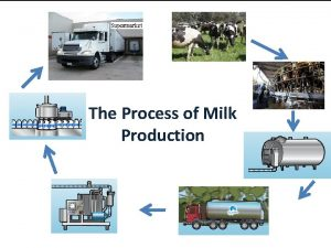 The Process of Milk Production Grazing Dairy cows