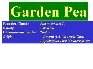 Garden Pea Botanical Name Pisum satvum L Family