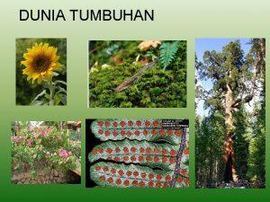DUNIA TUMBUHAN Contoh anggota kingdom Plantae Dunia Tumbuhan