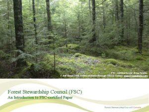 FSCcertified forest Nova Scotia Jeff Amos 2006 Prints