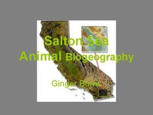 Salton Sea Animal Biogeography Ginger Burns History Accidentally