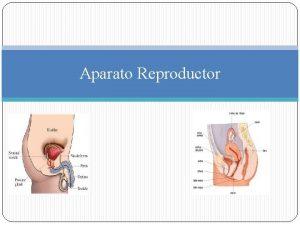 Aparato Reproductor Aparato Reproductor La Reproduccin es el