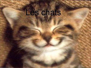 Les chats Table des matires Page 3 Alimentation