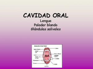 CAVIDAD ORAL Lengua Paladar blando Glndulas salivales LENGUA