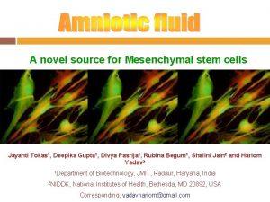 A novel source for Mesenchymal stem cells Jayanti