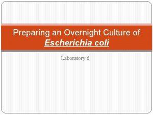 Preparing an Overnight Culture of Escherichia coli Laboratory