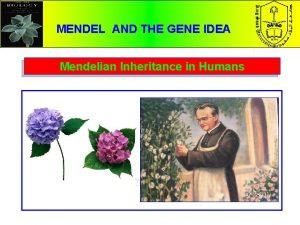 MENDEL AND THE GENE IDEA Mendelian Inheritance in