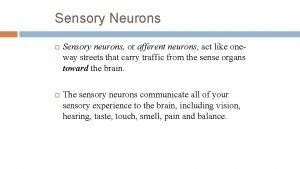 Sensory Neurons Sensory neurons or afferent neurons act