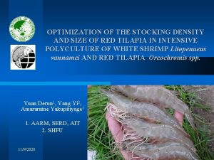 OPTIMIZATION OF THE STOCKING DENSITY AND SIZE OF