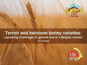 Terroir and heirloom barley varieties upcoming challenges in