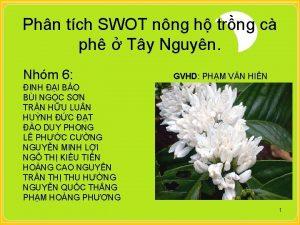 Phn tch SWOT nng h trng c ph