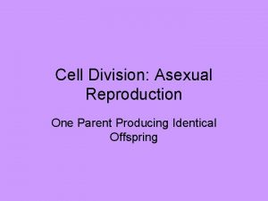 Cell Division Asexual Reproduction One Parent Producing Identical