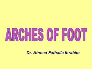 Dr Ahmed Fathalla Ibrahim FUNCTIONS OF FOOT Support