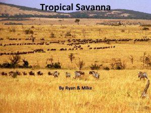 Tropical Savanna By Ryan Mike Climate A tropical