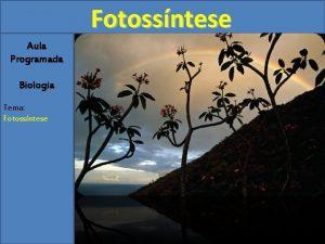 Fotossntese Aula Programada Biologia Tema Fotossntese Fotossntese 1