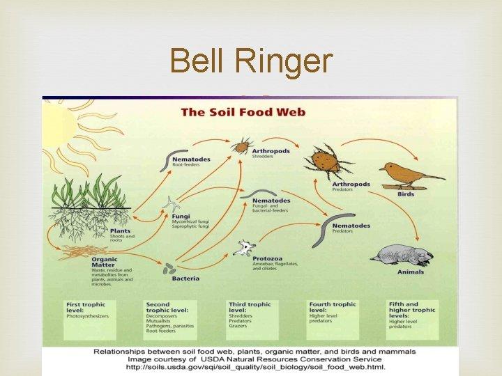 Bell Ringer Bell Ringer 1 Can a food
