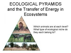 ECOLOGICAL PYRAMIDS and the Transfer of Energy in
