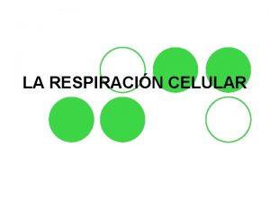 LA RESPIRACIN CELULAR Mitocondria l La respiracin celular