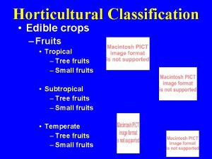 Horticultural Classification Edible crops Fruits Tropical Tree fruits