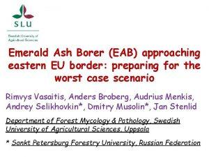 Emerald Ash Borer EAB approaching eastern EU border