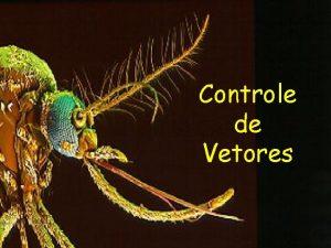 Controle de Vetores Aes de controle das doenas