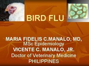 BIRD FLU MARIA FIDELIS C MANALO MD MSc