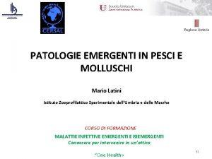 PATOLOGIE EMERGENTI IN PESCI E MOLLUSCHI Mario Latini