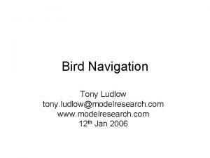 Bird Navigation Tony Ludlow tony ludlowmodelresearch com www
