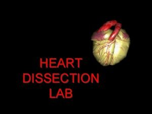 HEART DISSECTION LAB Procedure 1 Obtain a dissection