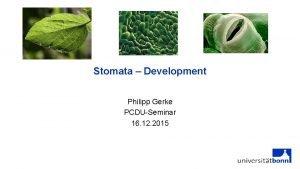 Stomata Development Philipp Gerke PCDUSeminar 16 12 2015