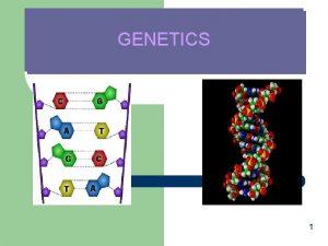 GENETICS 1 What is Genetics The Study of
