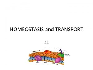 HOMEOSTASIS and TRANSPORT A 4 A 4 Homeostasis