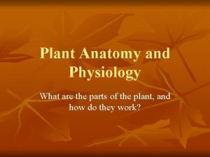 Plant Anatomy and Physiology What are the parts