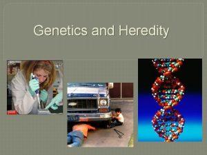 Genetics and Heredity Genetics Vocabulary 1 dominant trait