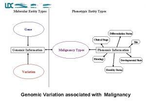 Molecular Entity Types Phenotypic Entity Types Gene Differentiation