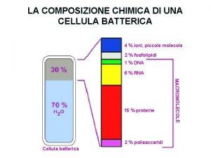 LA COMPOSIZIONE CHIMICA DI UNA CELLULA BATTERICA 4