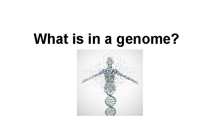 What is in a genome Genome The genome