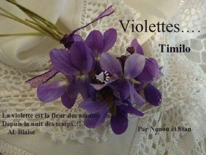 Violettes Timilo La violette est la fleur des