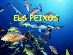 ELS PEIXOS Com sn Els peixos viuen a