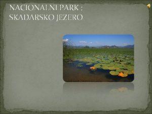NACIONALNI PARK SKADARSKO JEZERO Skadarsko jezero se nalazi