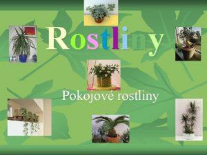 Rostliny Pokojov rostliny Kaktusy a Sukulenty n n
