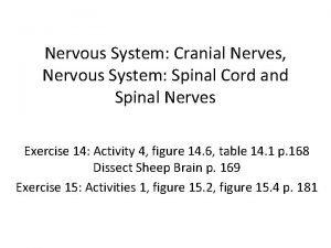 Nervous System Cranial Nerves Nervous System Spinal Cord
