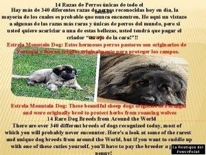 14 Razas de Perros nicas de todo el