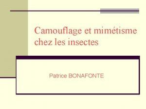 Camouflage et mimtisme chez les insectes Patrice BONAFONTE