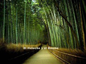 El Helecho y el Bamb Un da decid
